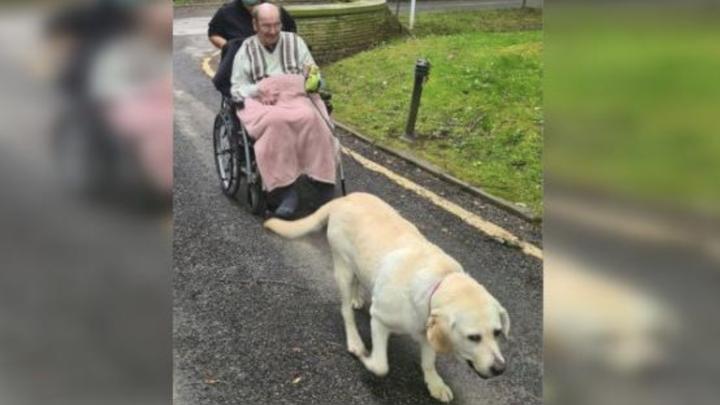 Weduwnaar is al 2 jaar van zijn hond gescheiden en verhuist nu naar verpleeghuis waar ze samen mogen zijn